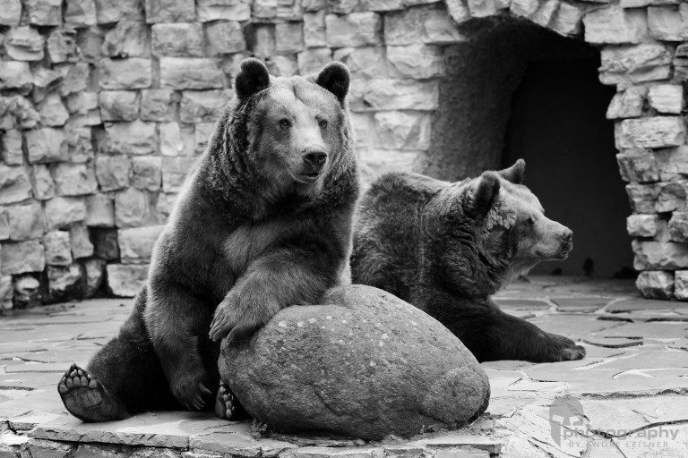 Tipps Zoofotografie