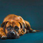 Gute Hundefotos