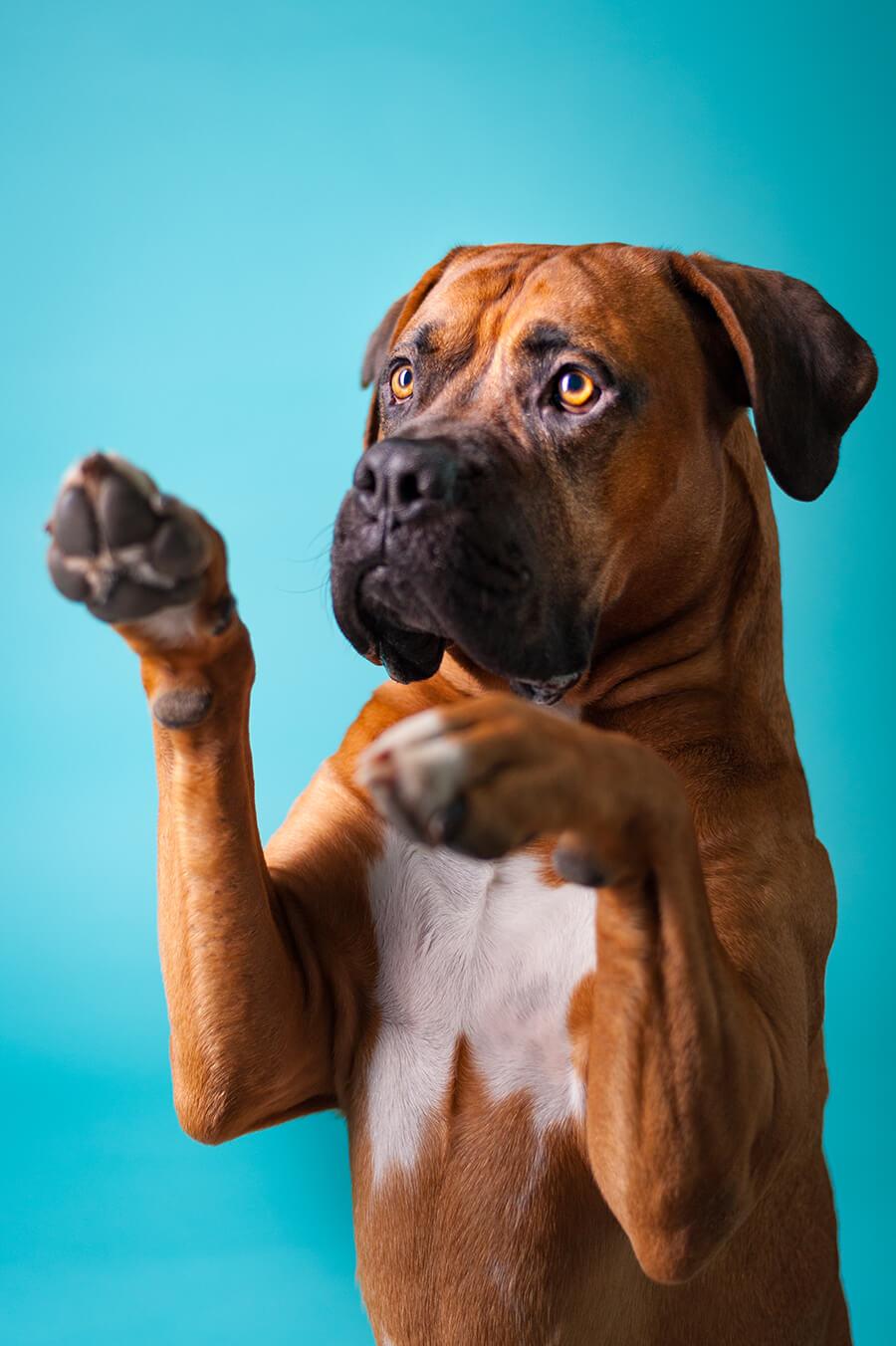 Hundeshooting Anmeldung