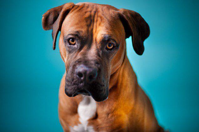 Kostenloses Hundeshooting
