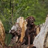 Bildauswahl Hundeshooting