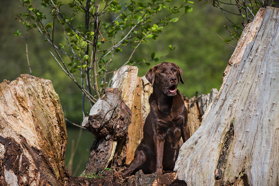 Die Bilder des Hundeshootings