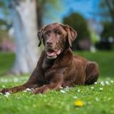 Stadtpark Luebeck Hundeshooting