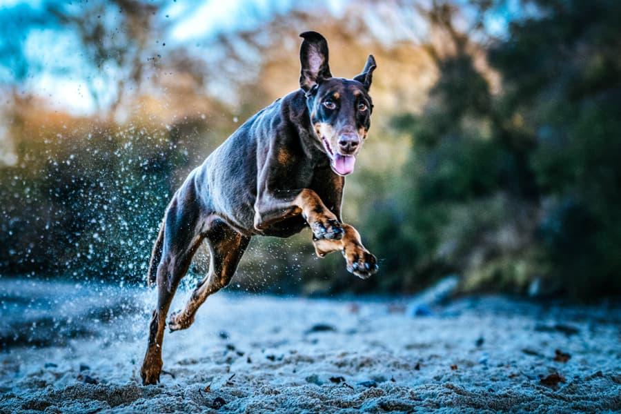 Dynamische Hundebilder
